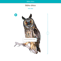 HTML5: Búho chico