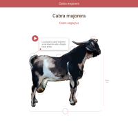 HTML5: Cabra majorera