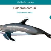 HTML5: Calderón