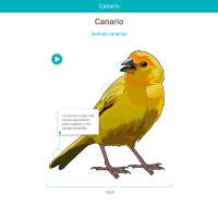 HTML5: Canario