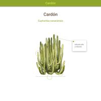 HTML5: Cardón