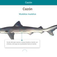 HTML5: Cazón