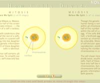 How Cells Divide