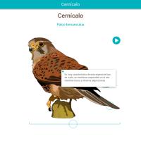 HTML5: Cernícalo
