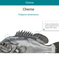 HTML5: Cherne