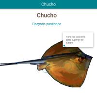 HTML5: Chucho