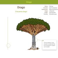 HTML5: Drago