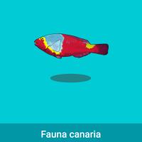 Acomola: Fauna canaria