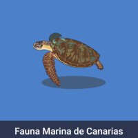Acomola: Fauna marina canaria