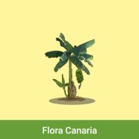 Acomola: Flora canaria