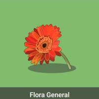 Acomola: Flora general