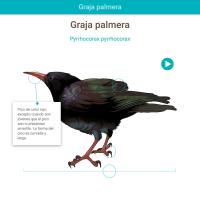 HTML5: Graja palmera