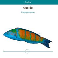 HTML5: Guelde