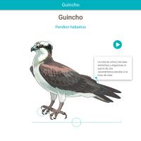 HTML5: Guincho