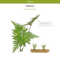 HTML5: Helecho batatilla