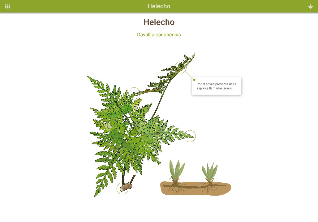 Infografía: Helecho » Recursos educativos digitales