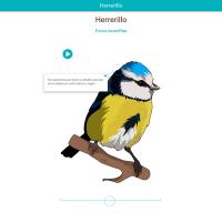 HTML5: Herrerillo