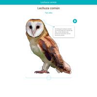 HTML5: Lechuza común