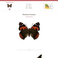 HTML5: mariposa vanessa