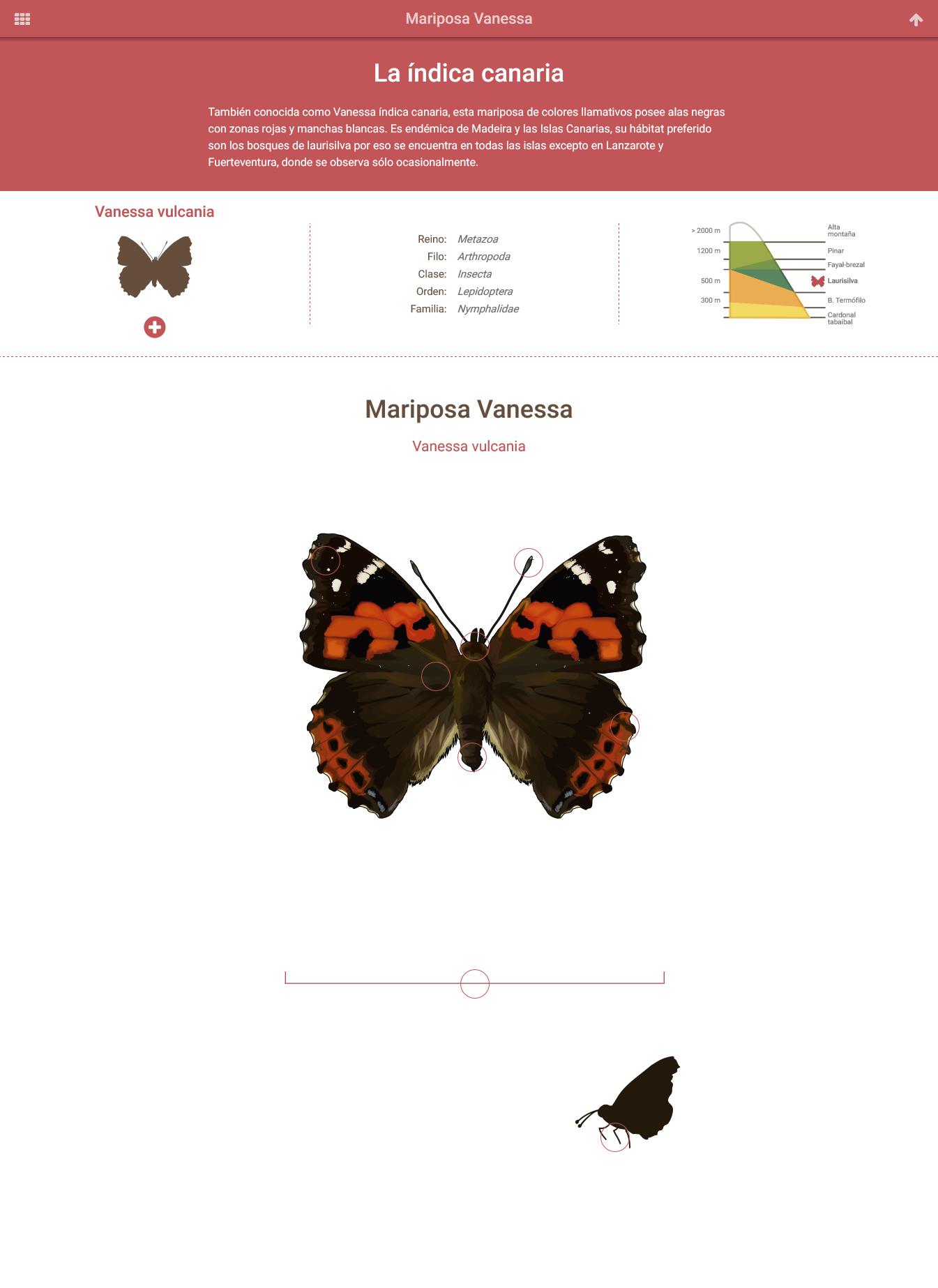 HTML5: mariposa vanessa » Recursos educativos digitales