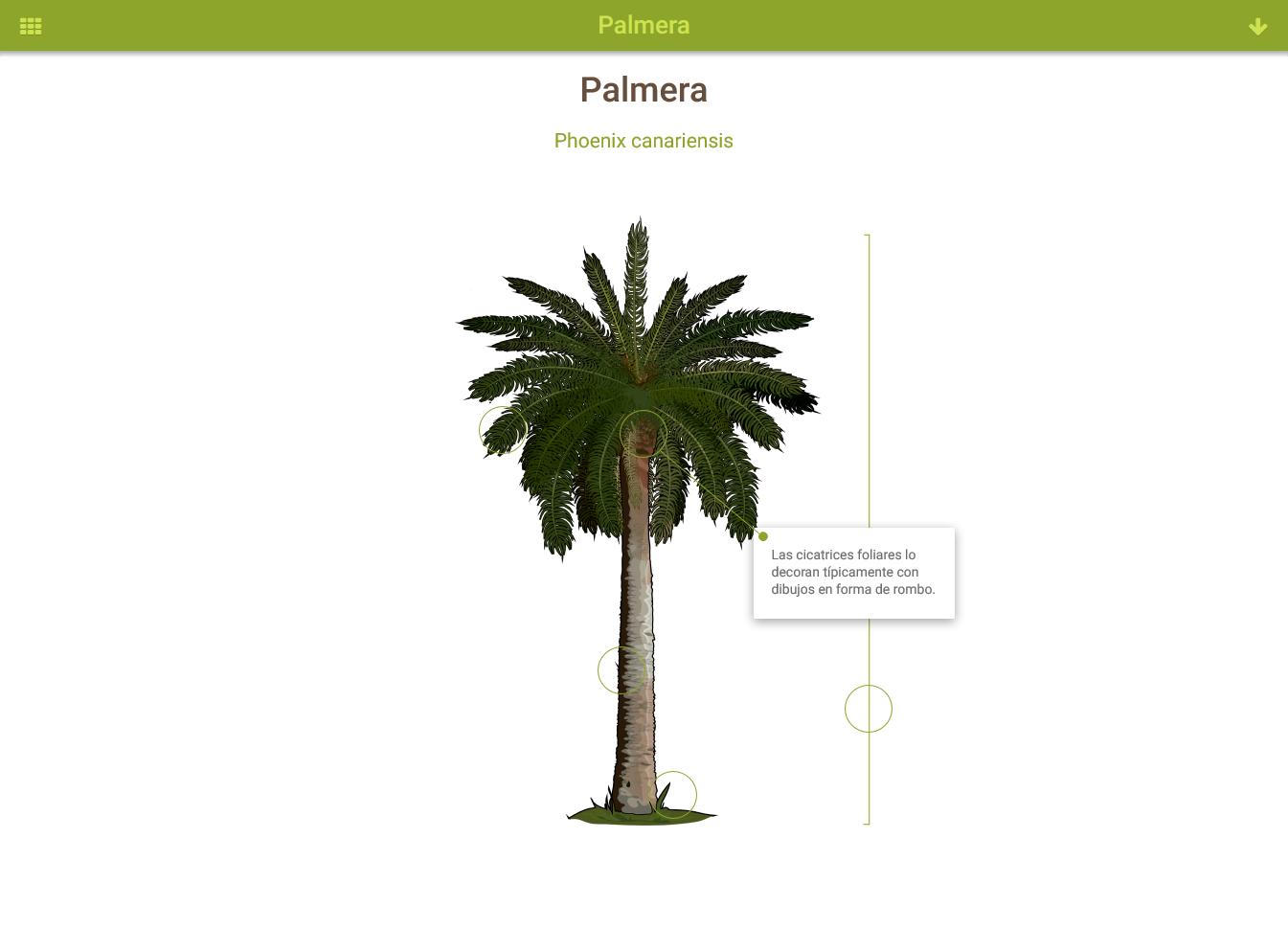 Infografía: Palmera » Recursos educativos digitales
