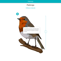 HTML5: Petirrojo