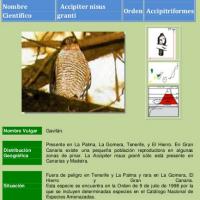 Fauna canaria: aves