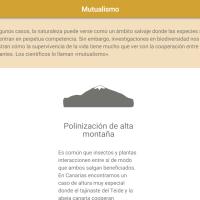 HTML5: Mutualismo