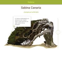 HTML5: Sabina