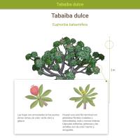 HTML5: Tabaiba dulce