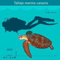 Infografía: Tallaje marino canario