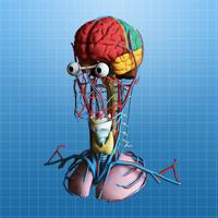 The Brain in 3D