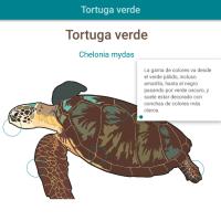 HTML5: Tortuga verde
