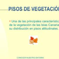 Pisos de vegetación en Tenerife