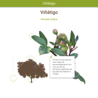 HTML5: Viñátigo
