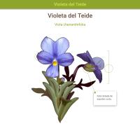 HTML5: Violeta del Teide