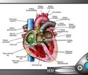 circulatorio01