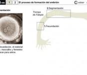desa_embrion