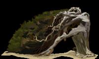 Mi bosque de Sabinas