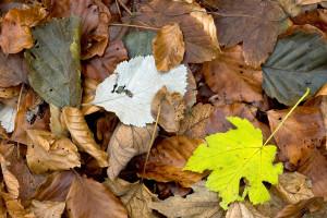 El viento de otoño