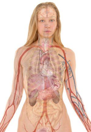 Nuestro cuerpo