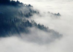 Captador de niebla