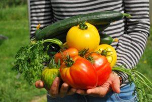 Alimentos saludables y sostenibles