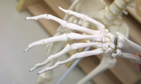 Nuestra enciclopedia de anatomía
