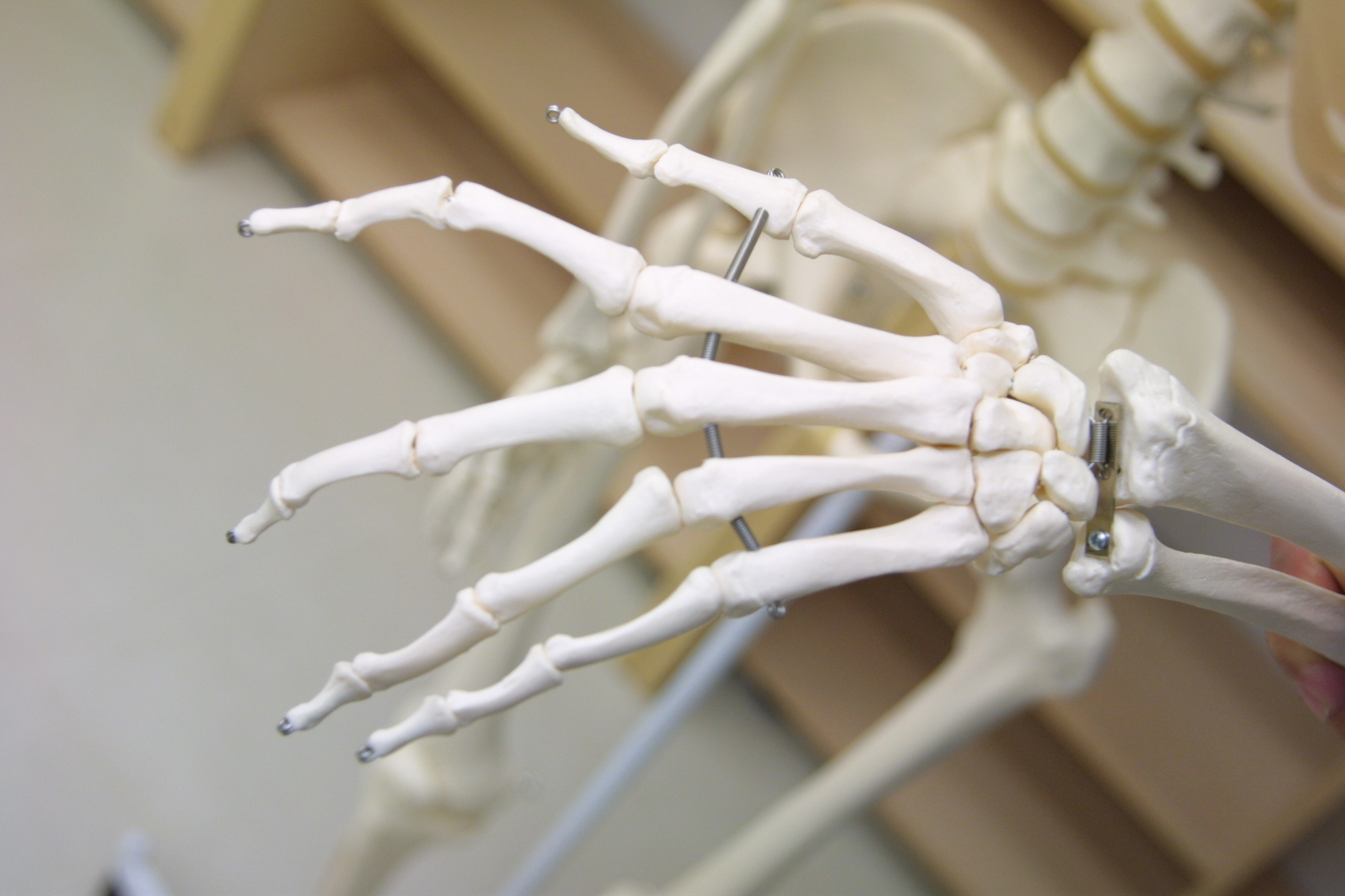 Nuestra enciclopedia de anatomía » Situaciones de Aprendizaje