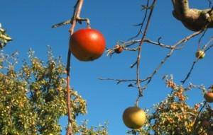 Si una manzana cae de un árbol al suelo, ¿por qué la Luna se mantiene en lo alto?
