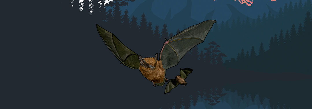 Nuevos artículos enciclopédicos e infografías sobre los murciélagos que habitan en Canarias.