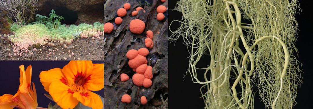 Descubre la riqueza de la flora canaria a través de una extensa colección de artículos e imágenes recientemente publicados.