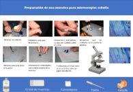 Preparación de una muestra para la observación en microscopio: cebolla