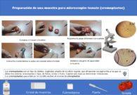 Ficha de preparación de muestras: observación de la cromatina del tomate